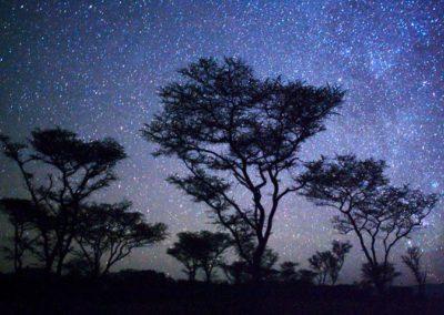 ACACIA TREES & STARS, KENYA