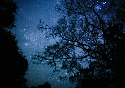 TREE CANOPY & STARS, UGANDA